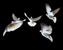 A Flock Of White Pigeons On A ...