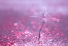 A Dandelion Seed With A Drop O...