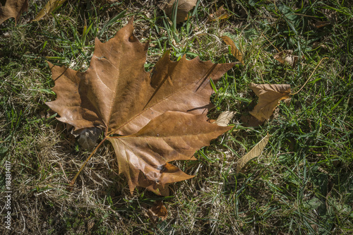 Photo  Hoja de otoño