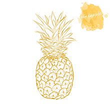 Ripe Pineapple On A White Background.  Hand Drawn Harvest Sketch Set.  Engraved Drawing. Design Elements For Banner, Cover, Label, Package, Promote.