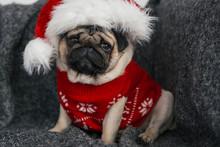 Cute Dog Pug In A Christmas De...