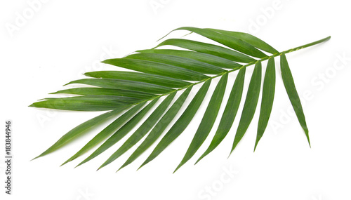 Foto auf Gartenposter Palms Green leaves of palm tree isolated on white background