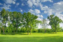 Cottonwood Trees Along A Misso...