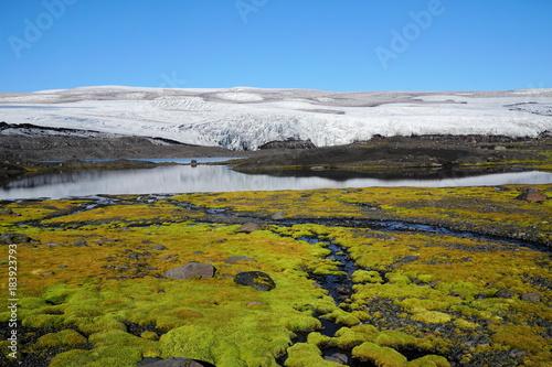 Fotobehang Scandinavië Gletscher und Moos auf Island, Skandinavien