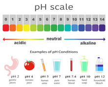 Scale Of Ph Value For Acid And...