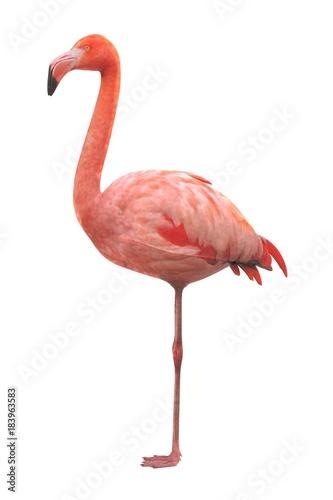 Foto op Aluminium Flamingo realistic 3d render of american flamingo