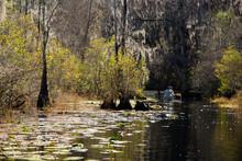 Paddling The Okefenokee Swamp
