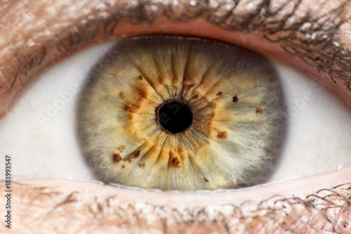 Poster Iris Macro photo of human eye, iris, pupil, eye lashes, eye lids.