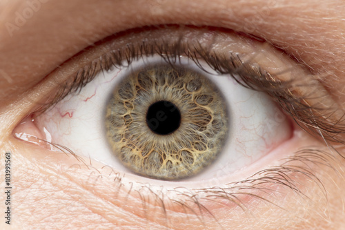 Photo Stands Iris Macro photo of human eye, iris, pupil, eye lashes, eye lids.