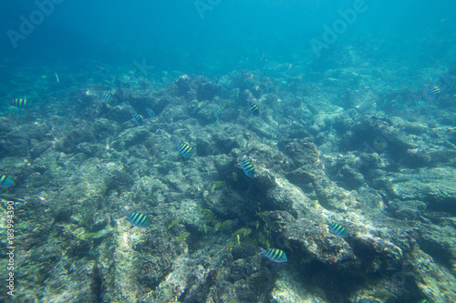 Staande foto Koraalriffen Underwater life of the Caribbean Sea