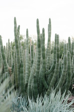 Cacti Landscaping