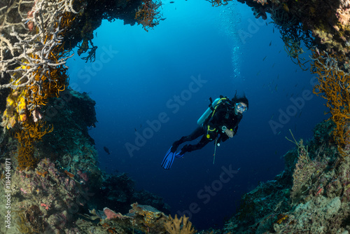 Plakat Fani morza na zboczu rafy koralowej z nurkiem na głębokości