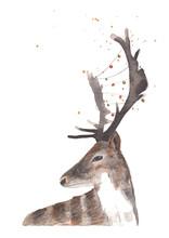 Watercolor Illustration Deer W...