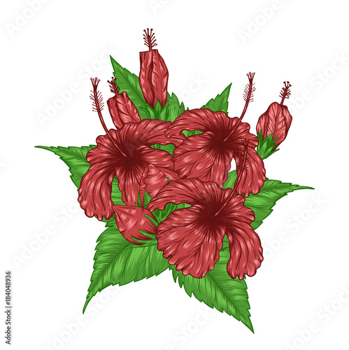 Hibiscus Flower Vector By Hand Drawingbeautiful Flower On Brown