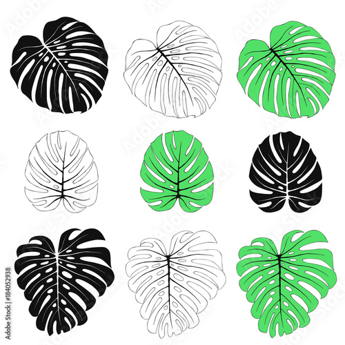 Monstera Leaves Set