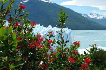 Obraz na SzkleFleurs rouges devant le Perito Moreno