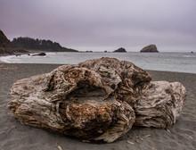 Large Driftwood On Rocky Coast