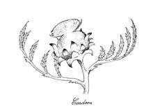 Hand Drawn Of Fresh Cardoon Flower On White Background