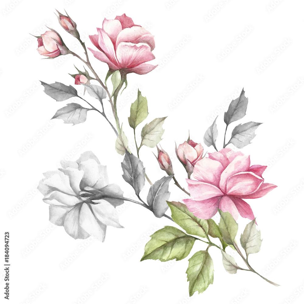 Wizerunek róża Ręka remisu akwareli ilustracja