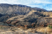 Forest Fire Landscape From Southern California Fires