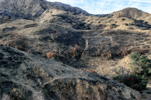 Forest Fire Damage In Southern California