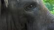 an Elephant`s Head Turns Slowly Aside in a Zoo in Summer
