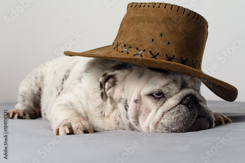 Cute English Bulldog With Cowboy Hat Buy This Stock Photo And