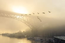 A Golden Foggy Morning Over La...
