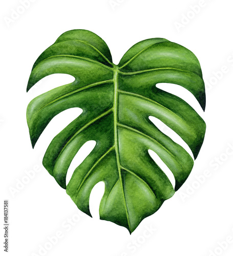 Green monstera leaf Canvas Print