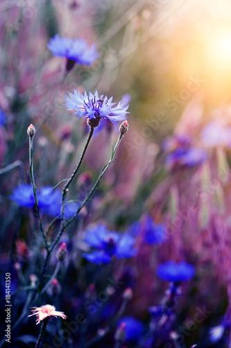 piekny-dziki-kwiat-w-zmierzchu