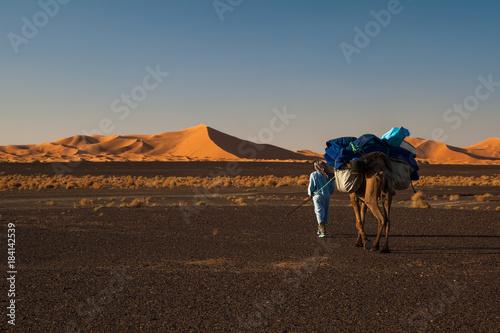 Fotografija  Chamelier marchant dans le désert du Sahara