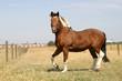 Pferde auf der Weide von Reitstall