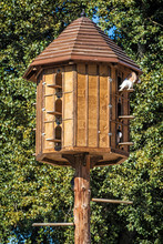 Wooden Dovecote With Pigeons In Forest