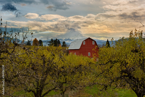Red Barn at Pear Orchard in Hood River Oregon USA America Plakát