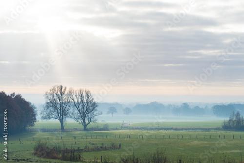 Tuinposter Olijf dutch agricultural landscape
