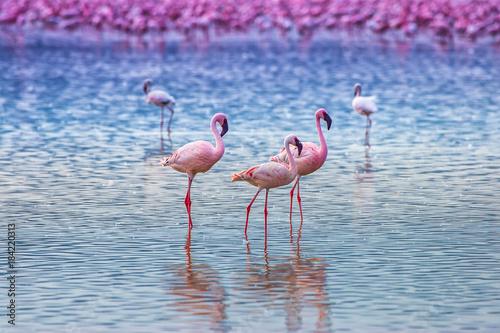 Africa. Lake flaming. Journey through Africa. Kenya. Flamingos in the water.