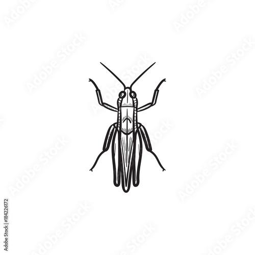 Obraz na płótnie Vector hand drawn grasshopper outline doodle icon