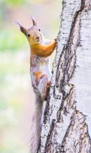 Merry Brisk Squirrel Scrambles...