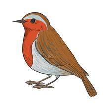 Vector Drawing Robin
