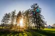 Nadelwald mit Sonnenstrahlen