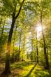 canvas print picture - Lichtdurchfluteter Wald