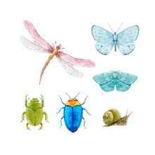 Watercolor Insect Vector Set