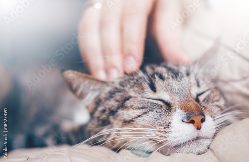 Poster de jardin Chat hand stroking a cat