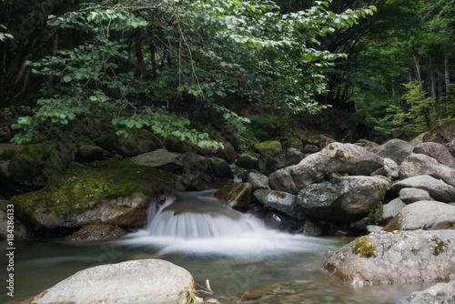 Foto auf Gartenposter Forest river 渓流