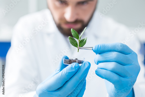 Fotografia  Selective focus of a plant being held with tweezers
