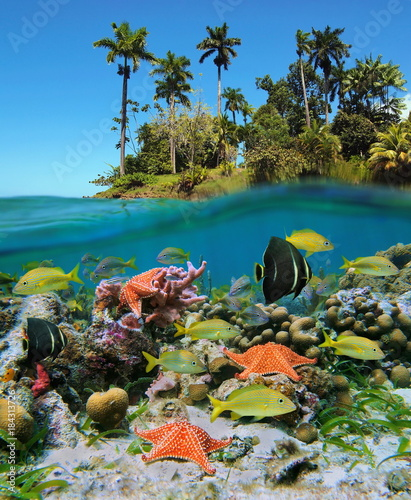 fototapeta na szkło Split view in the tropics with colorful fish and starfish in a coral reef underwater and lush tropical island above water surface, Caribbean sea