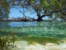 Split View In The Mangrove Wit...