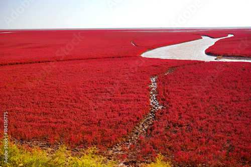 Ingelijste posters Rood traf. The Red beach is located in Panjin city, Liaoning, China. This is the biggest wetland featuring the red plant of Suaeda salsa in the world.