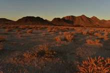 Mojave Desert Dawn Landscape Pahrump, Nevada