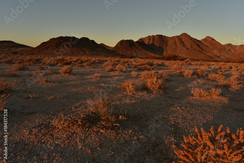 Fotobehang Grijze traf. Mojave desert dawn landscape Pahrump, Nevada